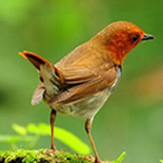 Chroma Radio - Nature Sound Logo